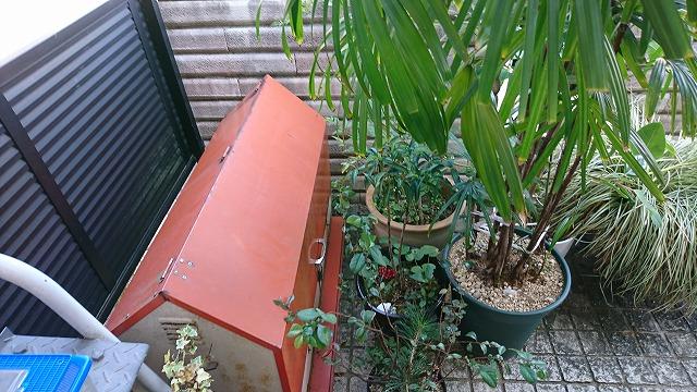 壁際の植木など