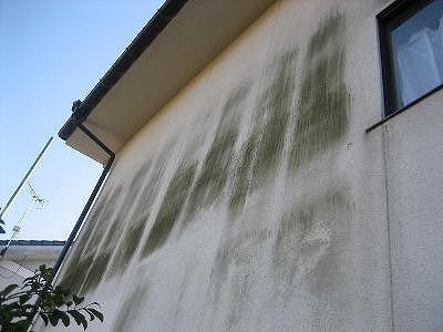 外壁のカビコケ